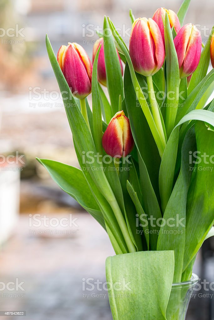 Tulips In Vase for Spring stock photo