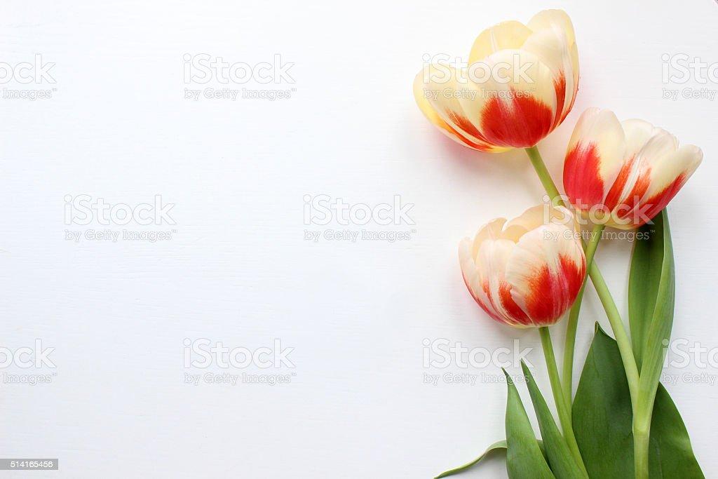 Tulips Mockup. Post blog social media. stock photo