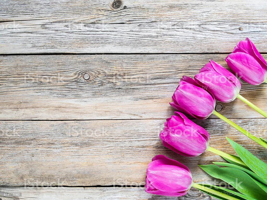 Tulips on a wood panels stock photo