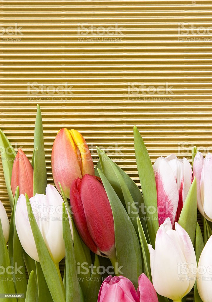 Tulips on gold background royalty-free stock photo