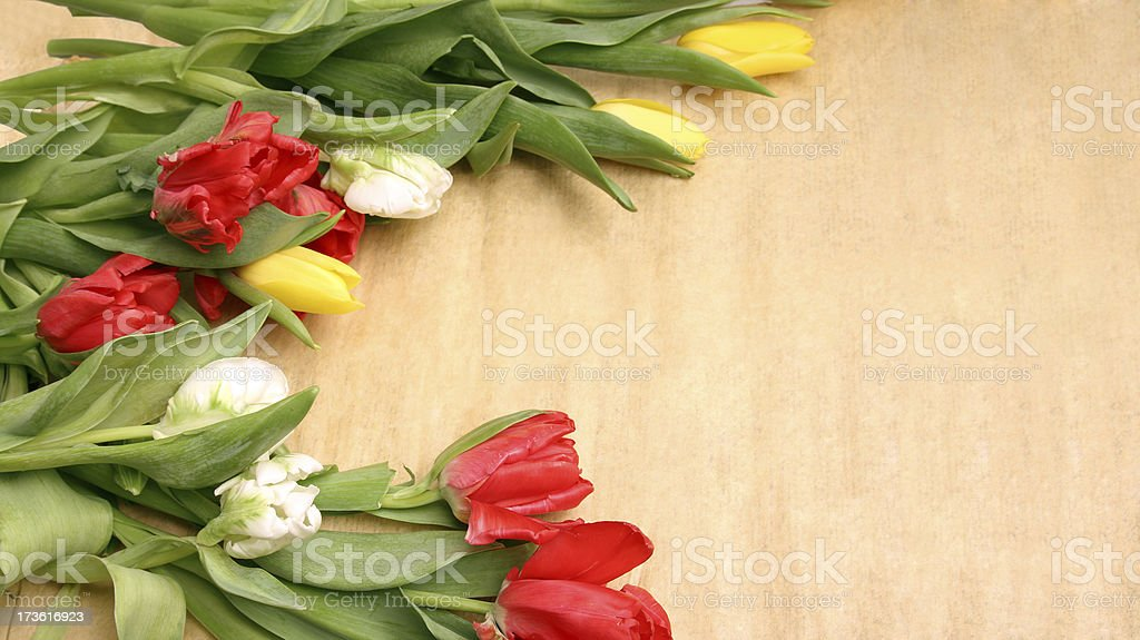 Tulips on parchment royalty-free stock photo