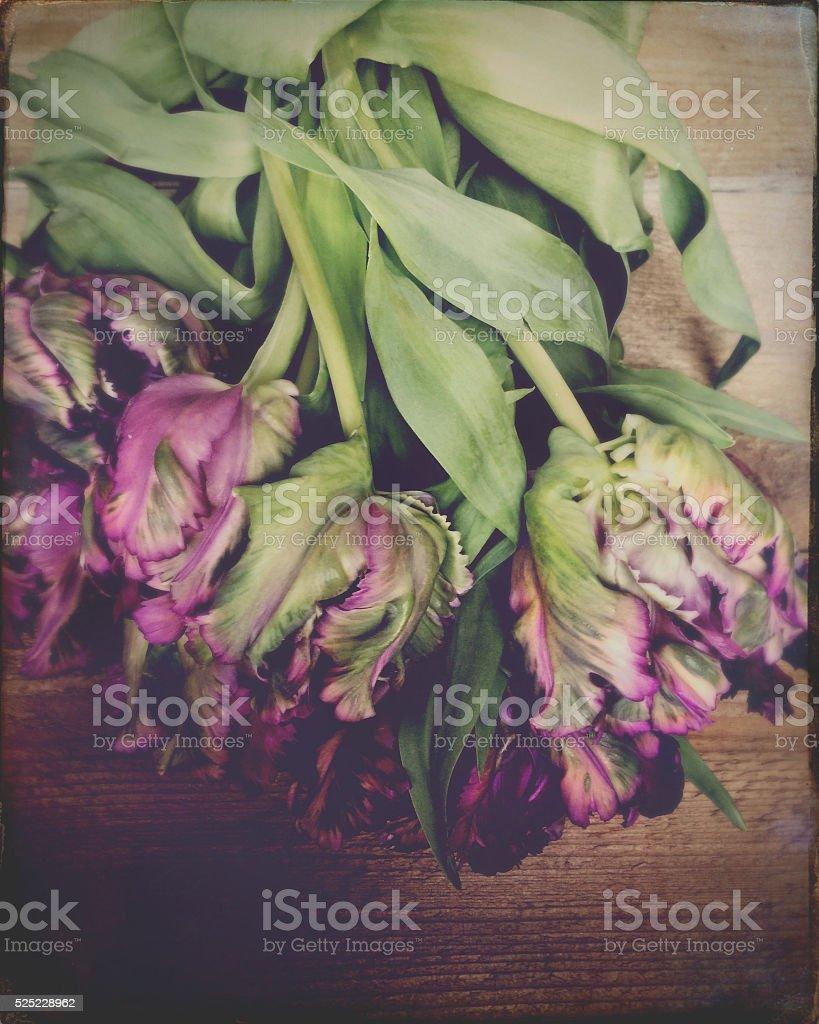 Tulips on Wood Still Life stock photo