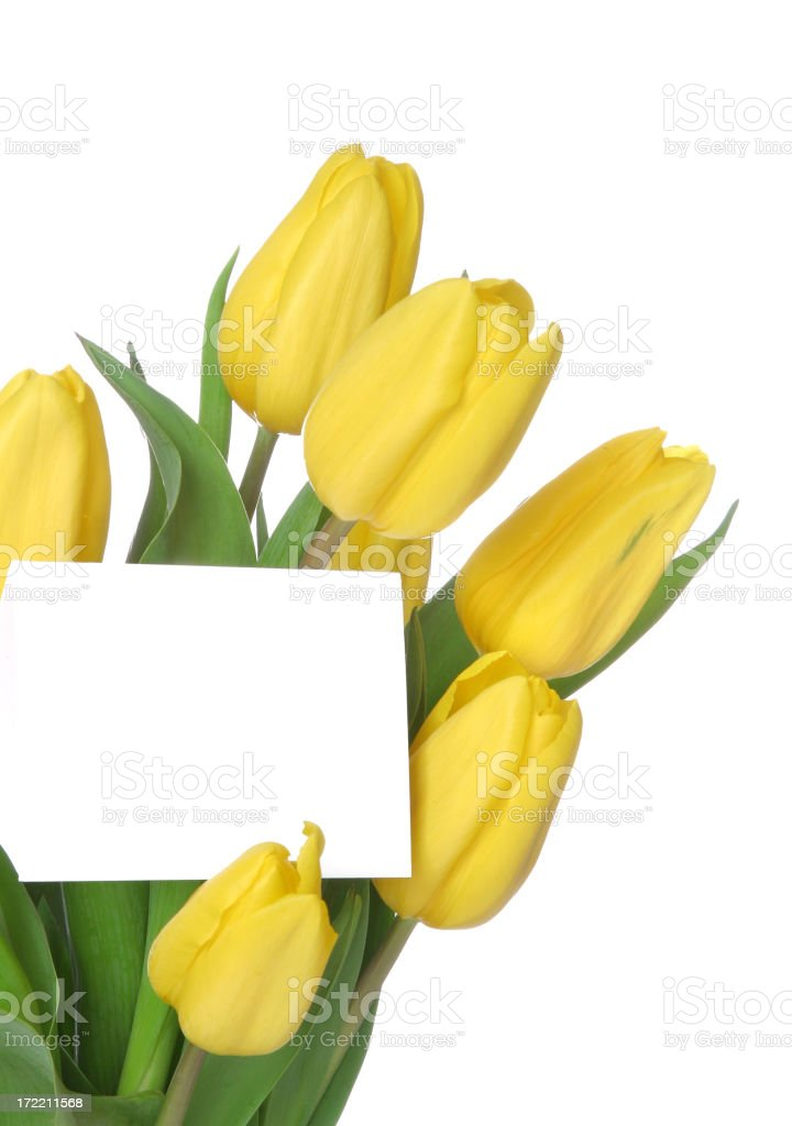 Tulips Series (Vertical with copyspace & blank card) royalty-free stock photo
