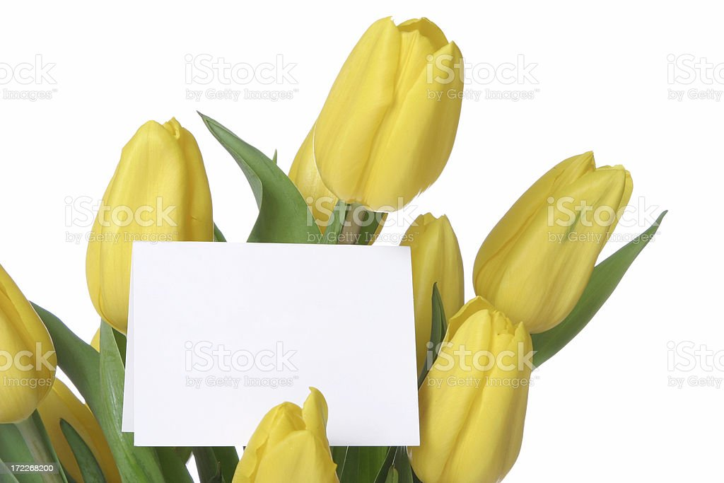 Tulips Series royalty-free stock photo