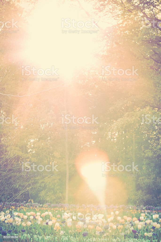 Tulip's soul. Sunny day on nature. Beautiful flowers. stock photo