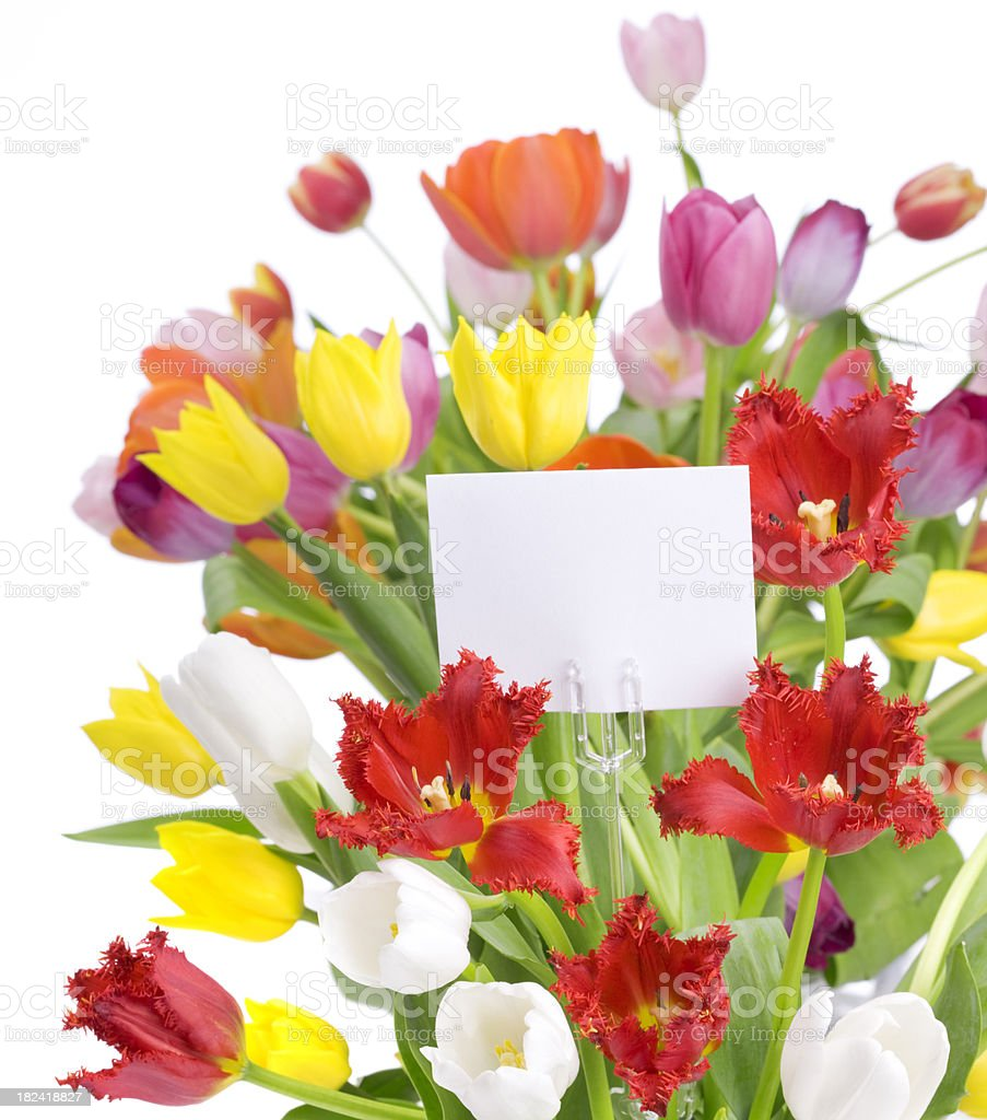 Tulips with a card stock photo