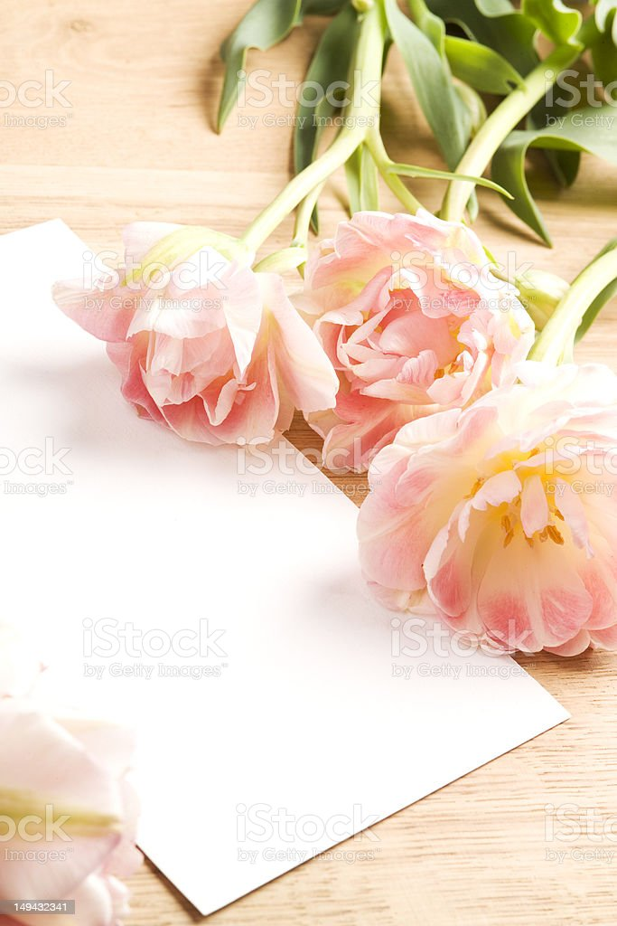 Tulips with blank card royalty-free stock photo