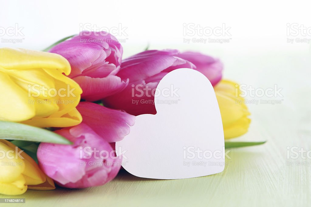 tulips with card royalty-free stock photo