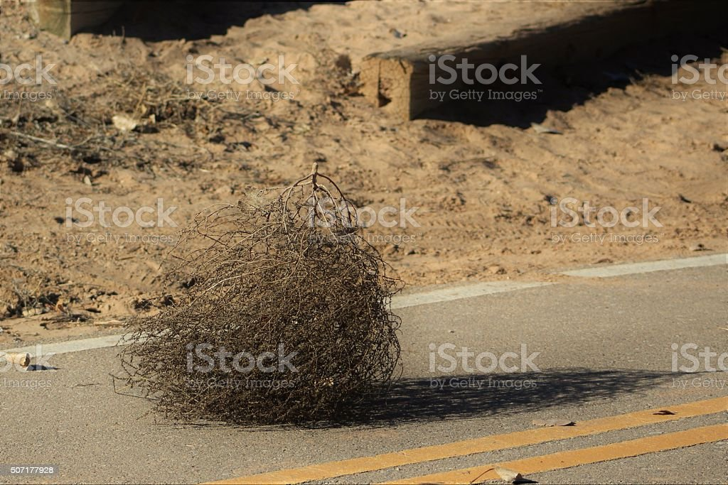 Tumbleweed on a Pedestrian Path stock photo