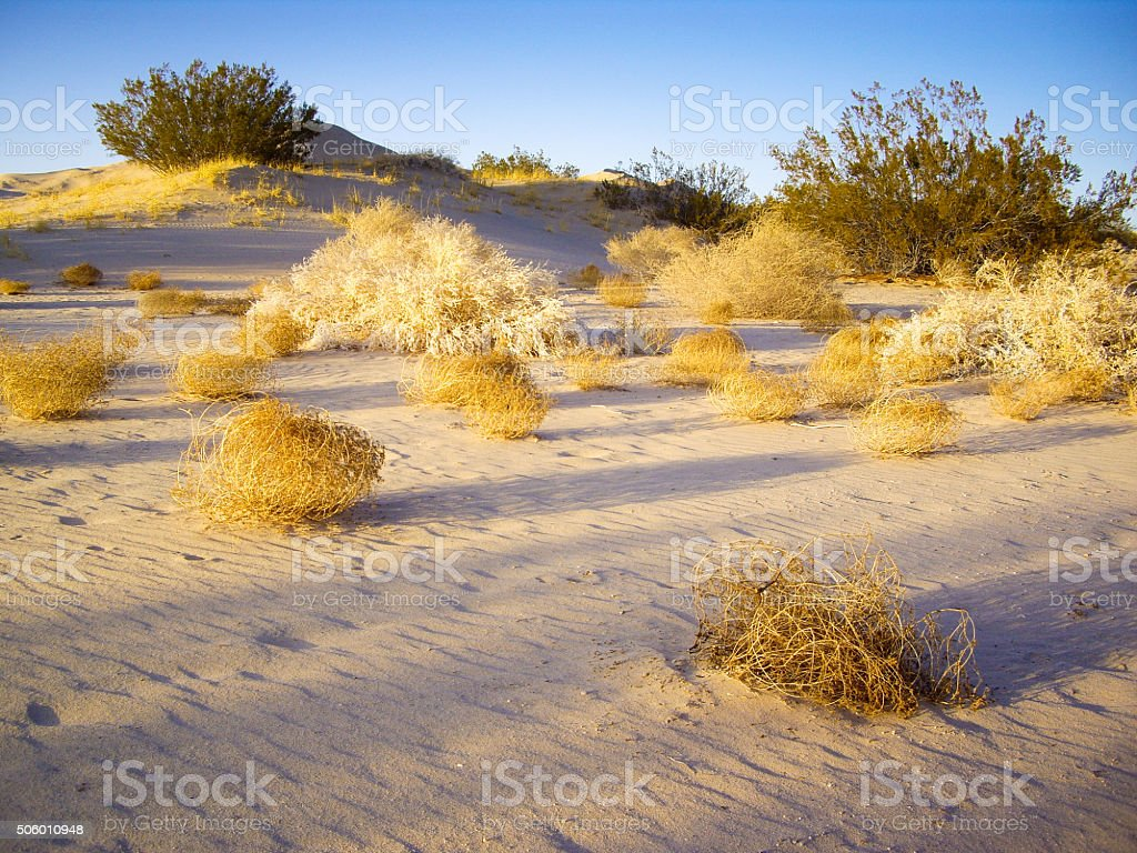 Tumbleweeds of Mojave Desert stock photo