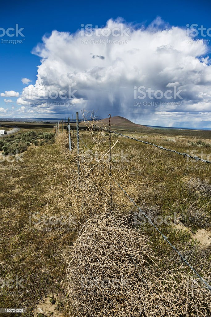 Tumbleweeds stuck on fence in a parched landscape royalty-free stock photo