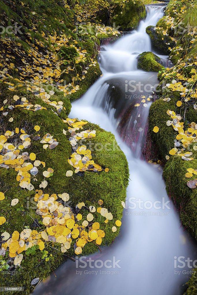 Tumbling Fall Creek, Rocky Mountains stock photo