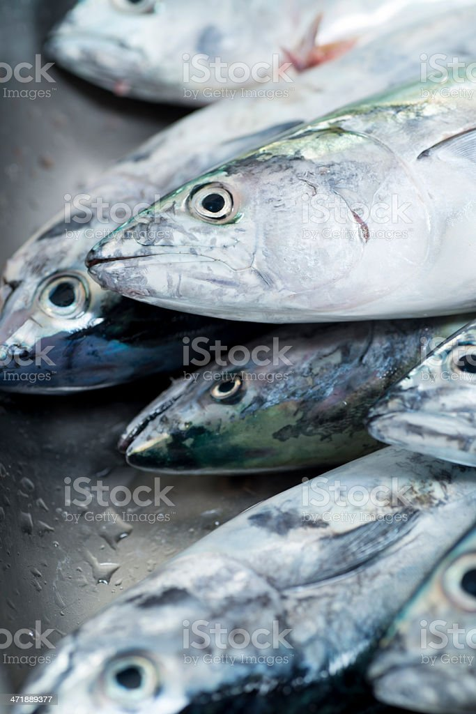 Tuna catch stock photo