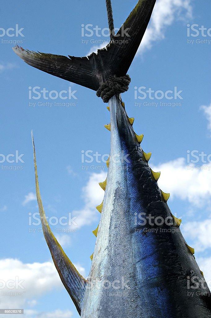 Tuna Fish Against Blue Sky stock photo