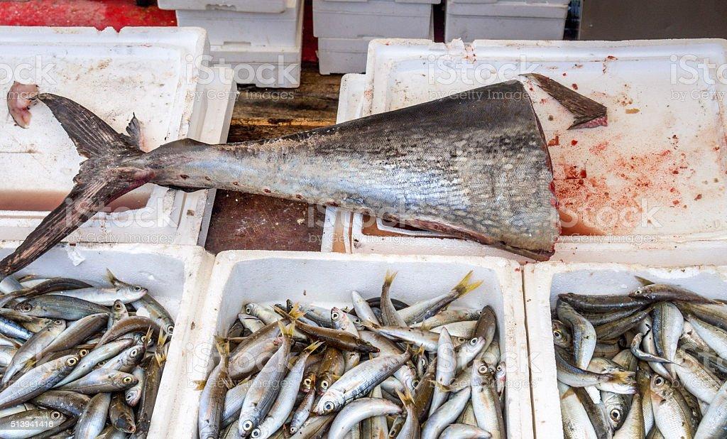 Tuna fish at market stock photo