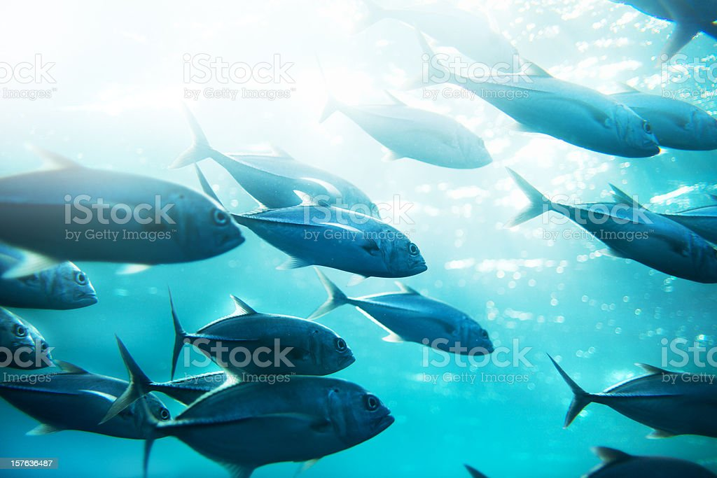 Tuna fish stock photo