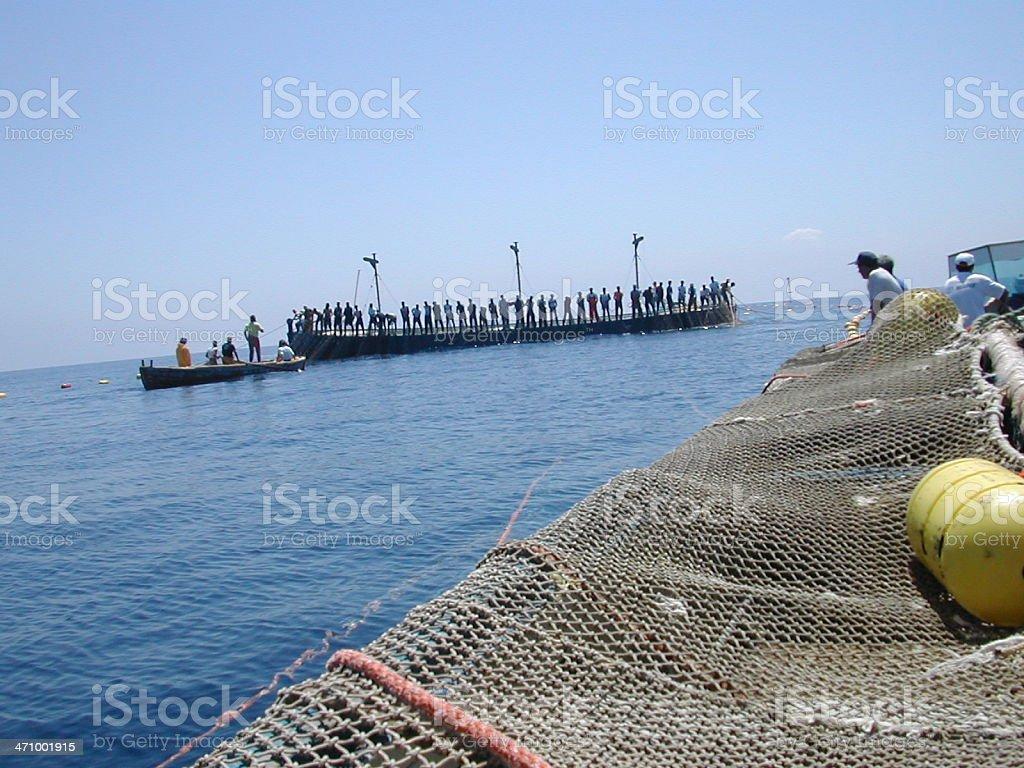 tuna fishing: mattanza in favignana stock photo
