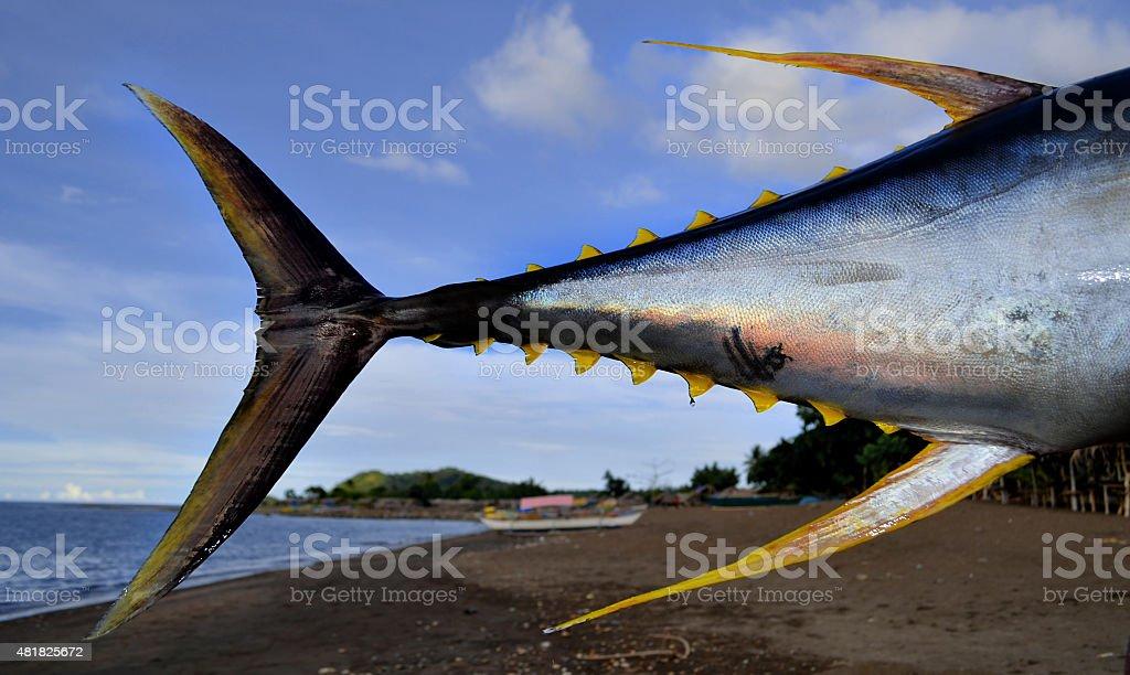 Tuna Tail stock photo