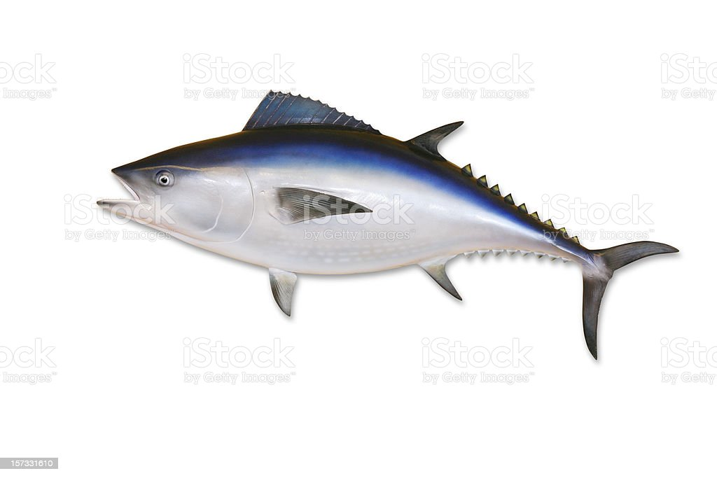 Tuna with Clipping Path royalty-free stock photo