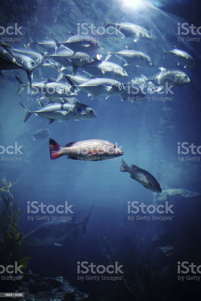 Tunafish stock photo