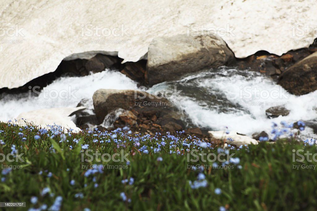 Tundra Flowers and Ice water Stream royalty-free stock photo