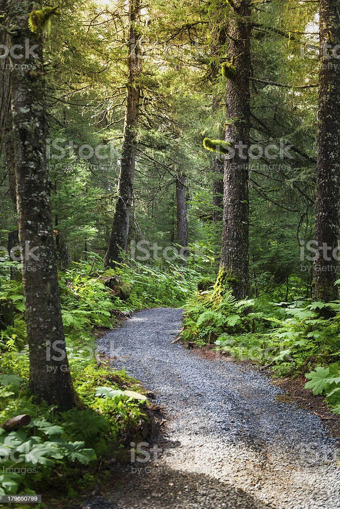 Tundra Forest stock photo