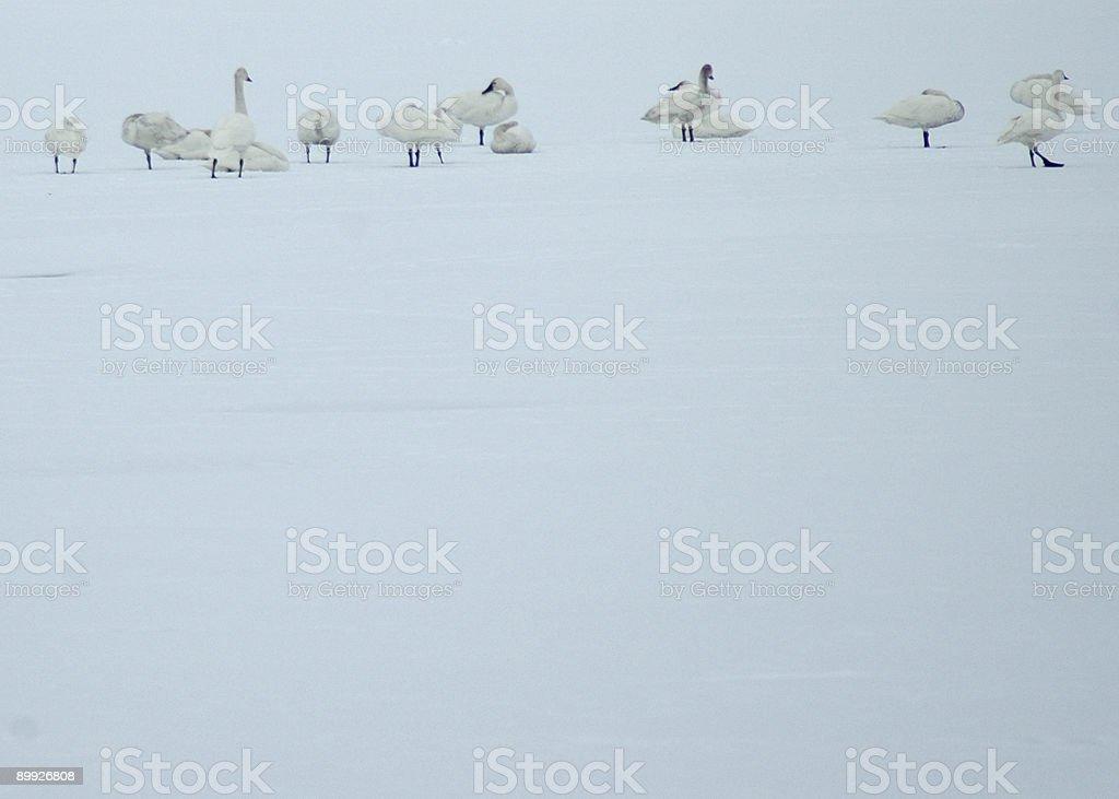 Tundra Migration stock photo