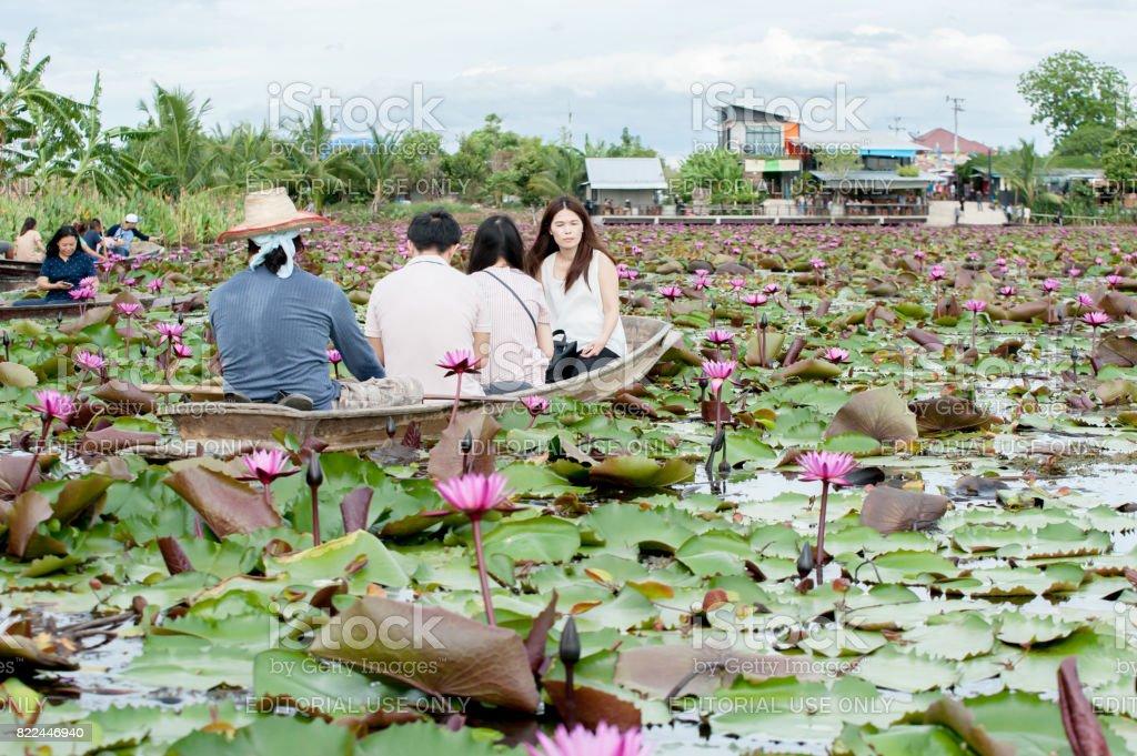 Tung Bua Daeng stock photo