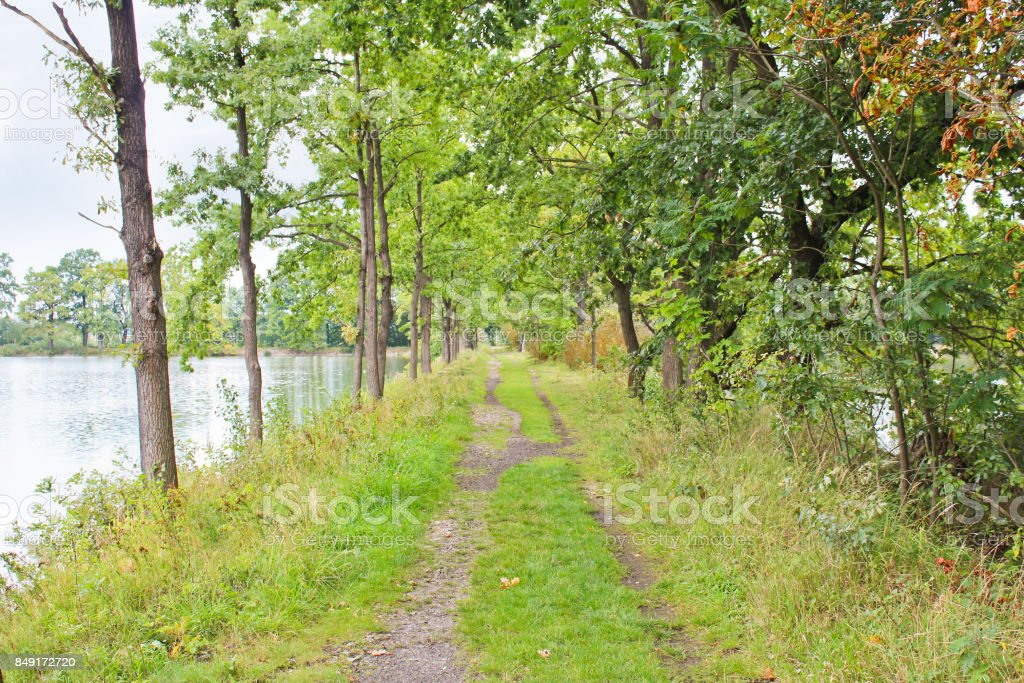 Tunnel from trees between two ponds, Czech landscape stock photo