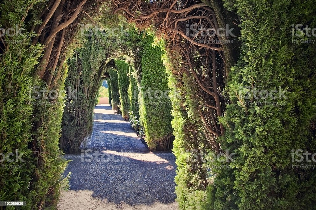 Tunnel in a hedge royalty-free stock photo