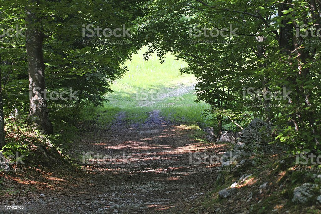 tunnel in the middle of dense forest royalty-free stock photo
