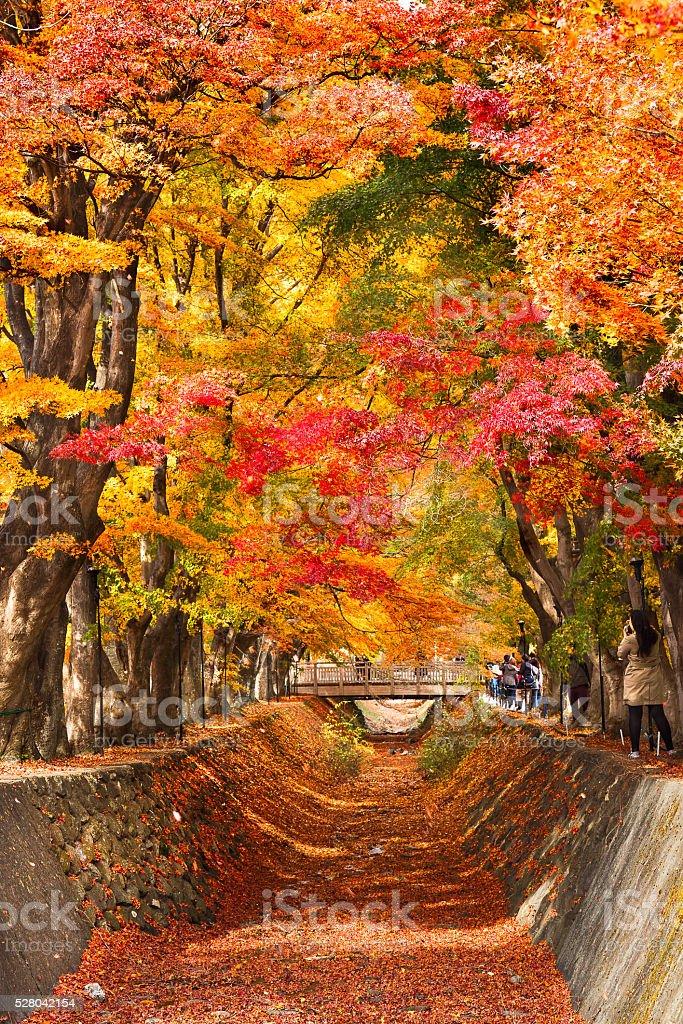 Tunnel of autumn stock photo