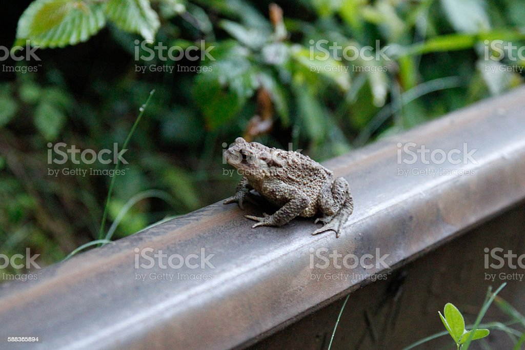 Tunnel of love.Frog-Princess. stock photo