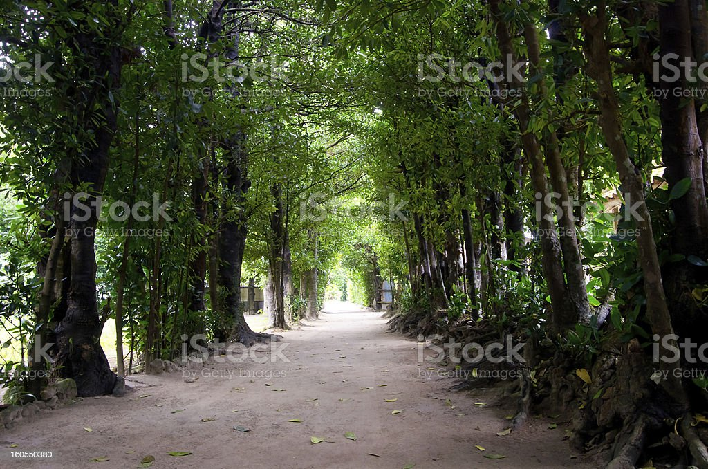 tunnel of the trees in Okinawa royalty-free stock photo