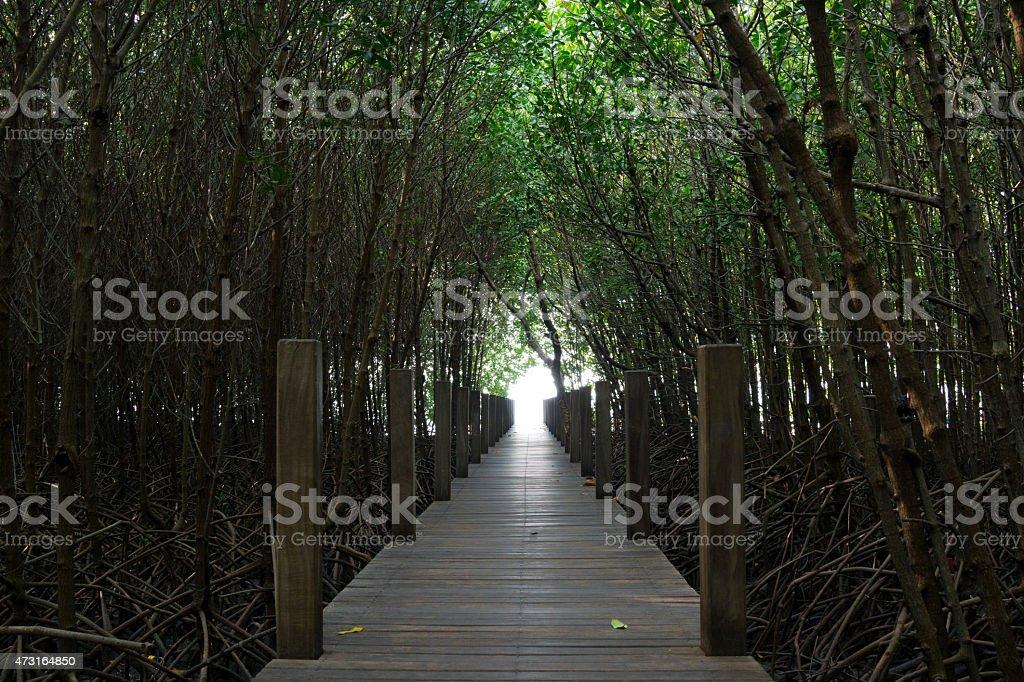Tunnel d'arbres dans la forêt de mangrove photo libre de droits