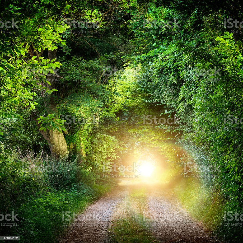 Tunnel of trees leading to light stock photo