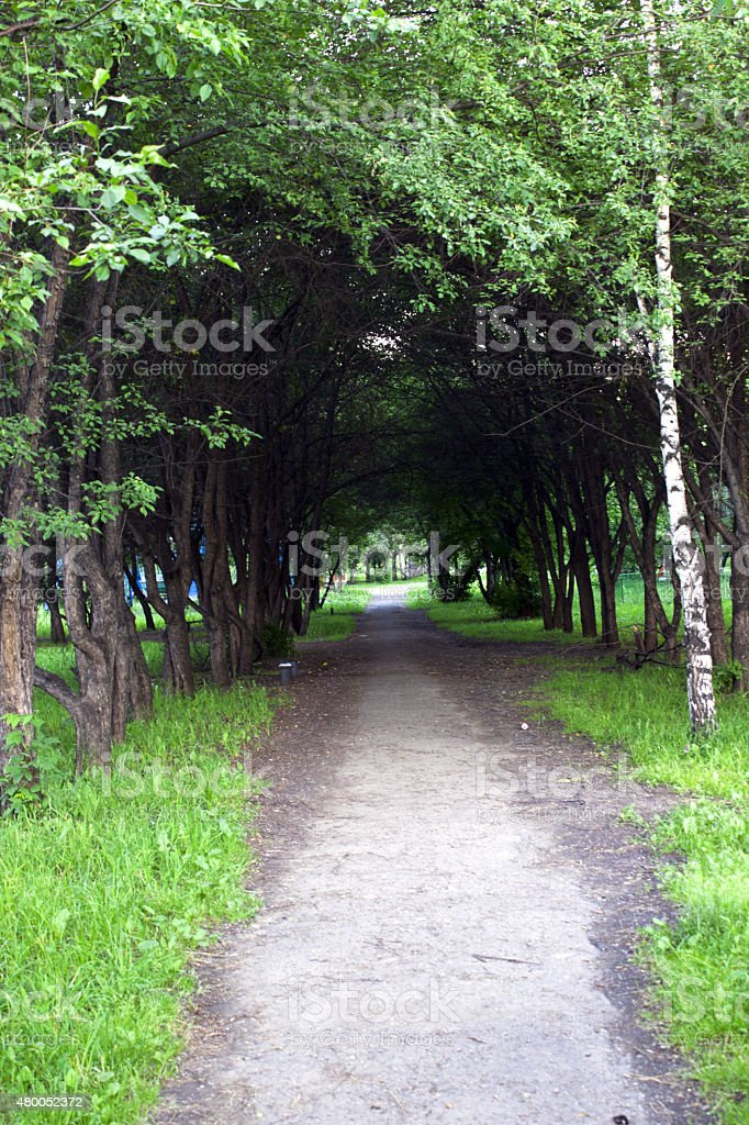 Tunnel of trees royalty-free stock photo