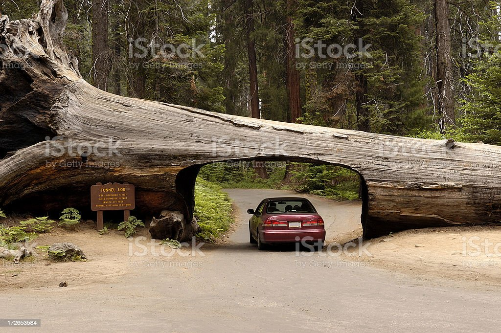 Tunnel tree in Sequoia National Park stock photo