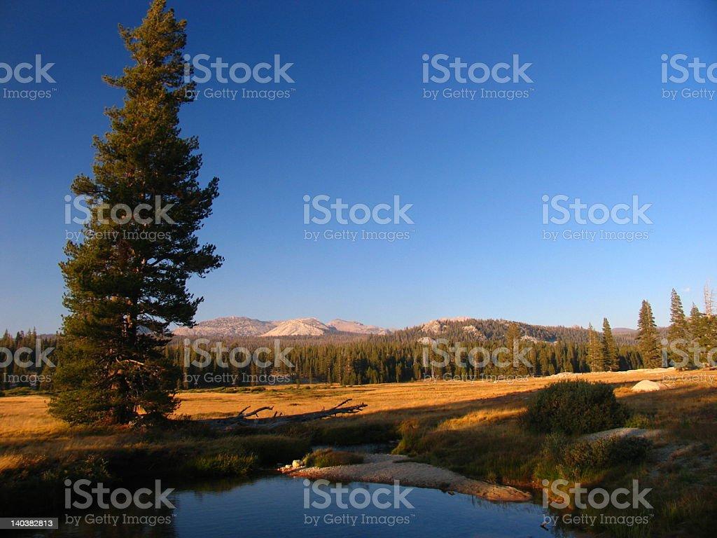Tuolumne Meadows stock photo