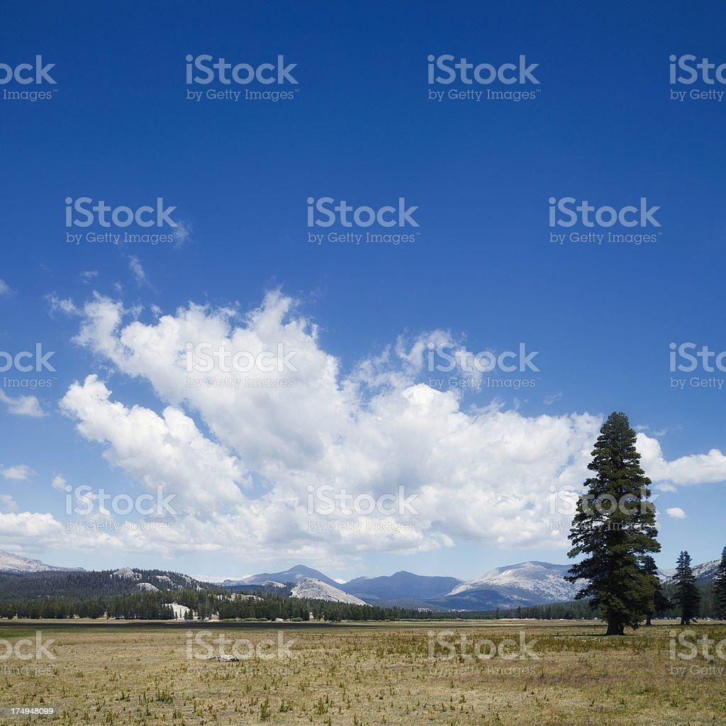 Tuolumne Meadows royalty-free stock photo