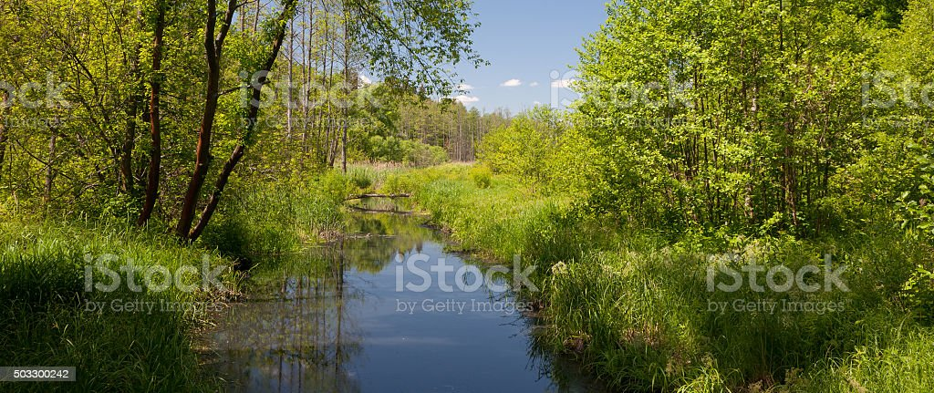 tural Lesna river in summer midday stock photo
