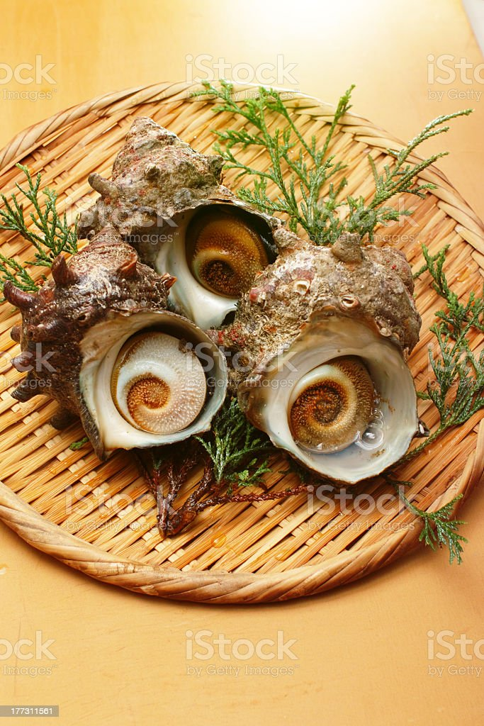 turban shell / sazae royalty-free stock photo