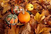 Turban squashes, pumpkin and gourds on crisp autumn leaves