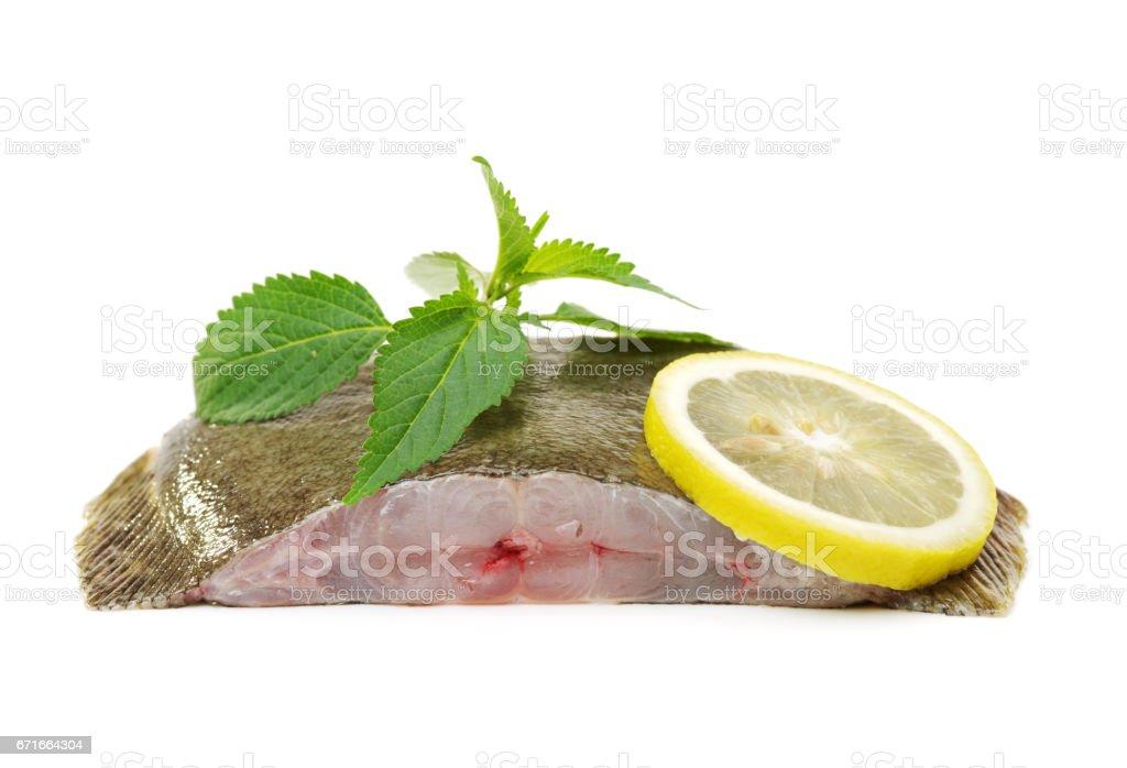 Turbot fish   Isolated on White stock photo