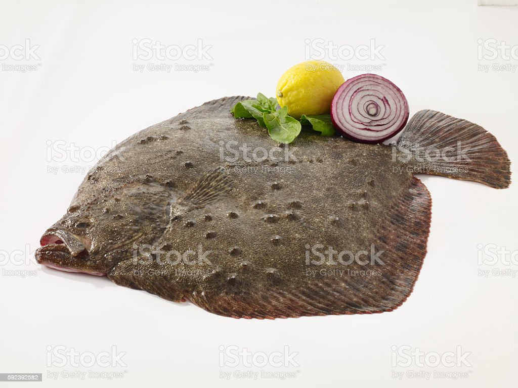 Turbot fish stock photo