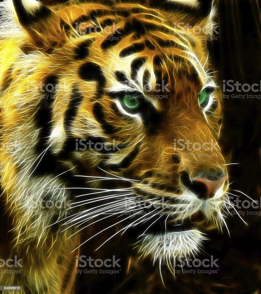 Turbulent Tiger royalty-free stock photo