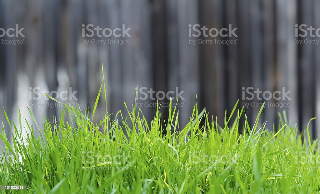 Turf of green grass royalty-free stock photo