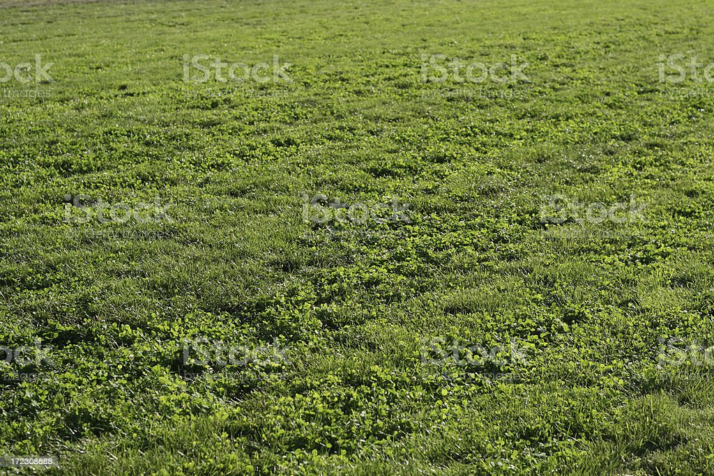 Turf royalty-free stock photo