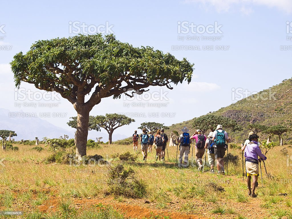 Turists and Myrrh  trees stock photo