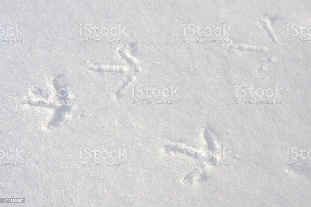 Turkey Footprints in Snow royalty-free stock photo